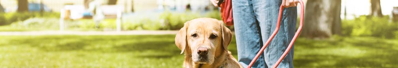 Photo: La compagnie d'un chien guide ne peut pas être remplacée par un téléphone portable.